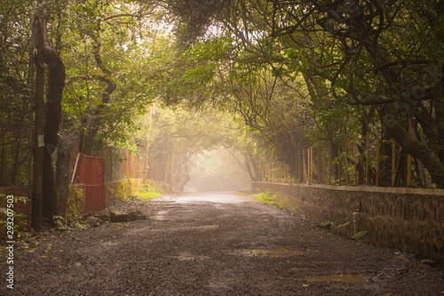 A beautiful foggy road in India Canvas Print