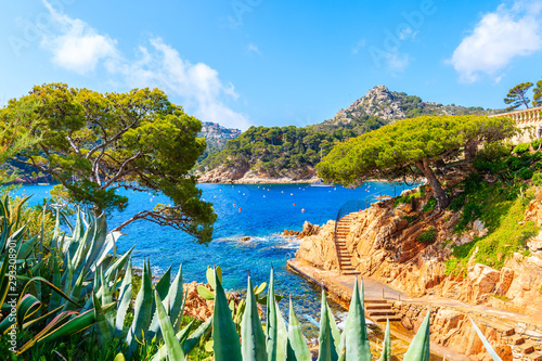 Photo Tropical plants on coastal path in Cala Fornells fishing village, Costa Brava, C