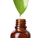 Essential oil drop falling from green leaf into glass bottle on white background, closeup