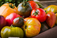 Colorful Tomatoes, Fresh Autumn Vegetables