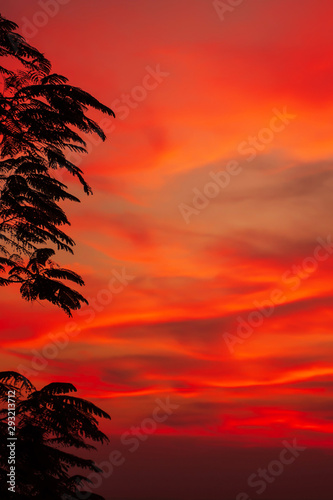 Garden Poster Red Dramatic sunset sky over a tropical forest.