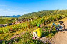Young Woman Cyclist Sitting Among Vineyards And Looking At Riquewihr Village On Alsatian Wine Route, France