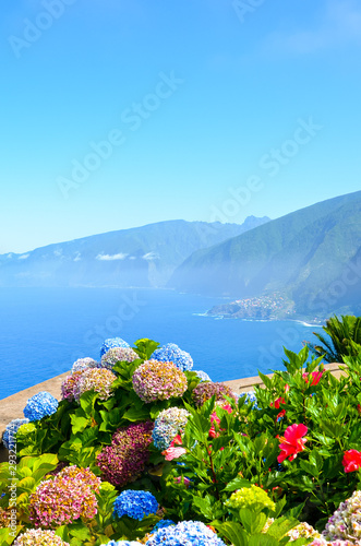 Colorful Hydrangea flowers and the beautiful northern coast of Madeira Island, Portugal. Typical Hortensia flower. Amazing coast by Ribeira da Janela. Atlantic ocean landscape. Haze in background Fototapete