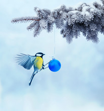 Postcard With Bird Tit Flying Next To Shiny Festive Ball On Christmas Tree In Winter Park