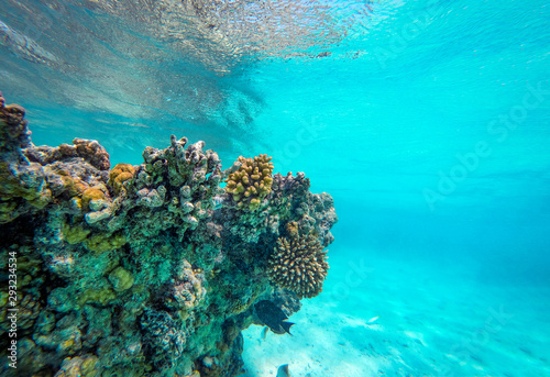 Foto auf Leinwand Turkis Underwater photo of coral reef and free space for your decoration