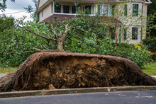 Uprooted Tree In Front Of A House After A Storm