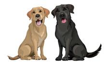 Yellow And Black Labrador Retr...