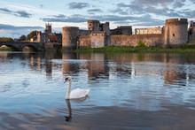 Swan On The Shannon River With...