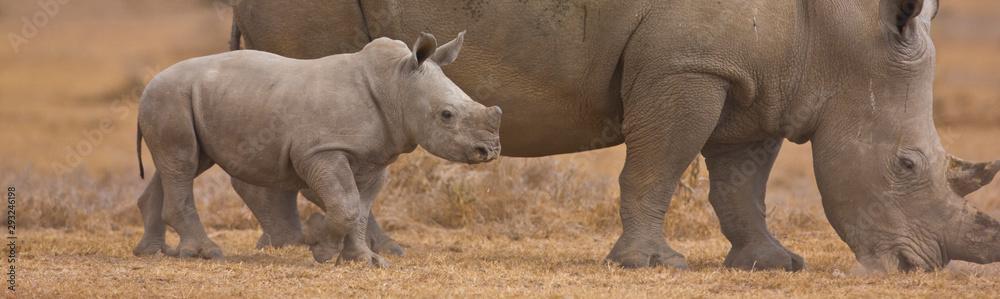 Fototapety, obrazy: Rinoceronte blanco, Reserva Solio Ranch, Kenia, Africa