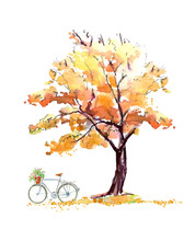 Oak In Autumn And Bicycle.Deci...