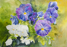 Watercolour Painting Of Blue And White Pansies On A Green Background