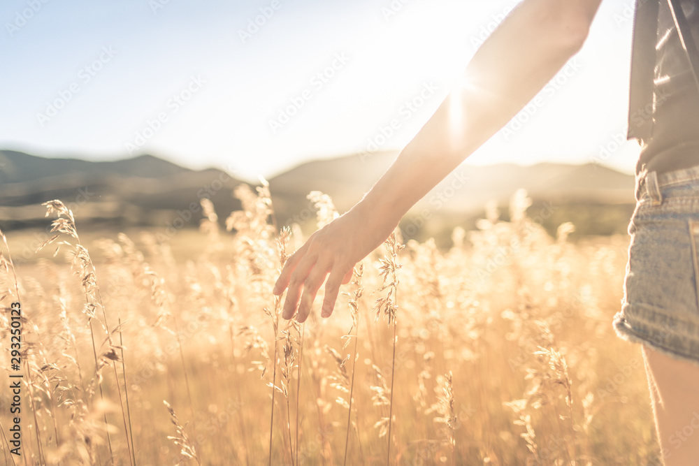Fototapety, obrazy: Female walking on open field at sunset softly brushing her hand over tall grass. Feeling at peace in nature concept.