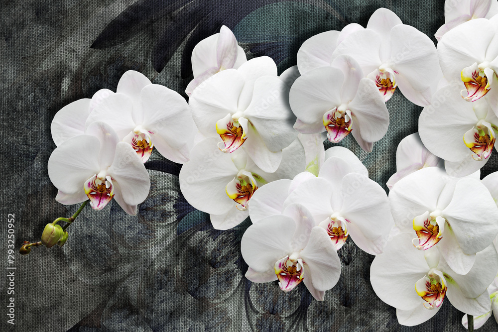 Fototapety, obrazy: 3d wallpaper texture, white orchids on abstract canvas textures. Grey background. Murals effect.