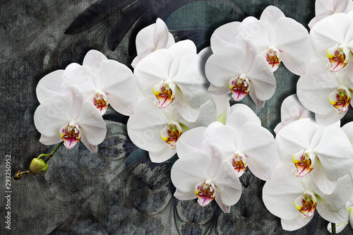 Fototapeta 3d wallpaper texture, white orchids on abstract canvas textures. Grey background. Murals effect. obraz