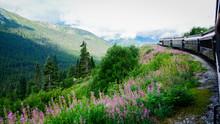 Fireweed Beside Moving Train To Yukon, Canada From Skagway, Alaska, United States.
