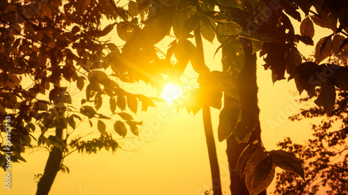 A view of sunlight shining through forest foliage. Canvas Print