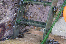 Detail Of The Bottom Rungs Of A Ladder Descending In To The Harbour In Cornwall