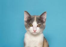 Portrait Of An Adorable Calico...