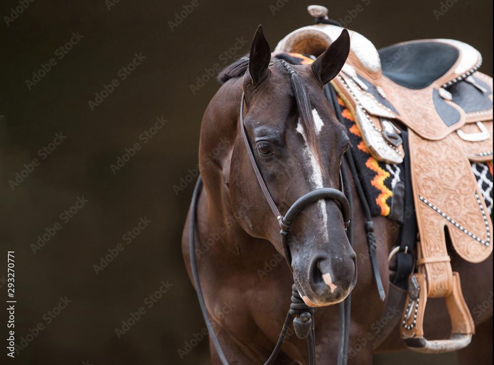 Fototapeta Paint Horse Stallion