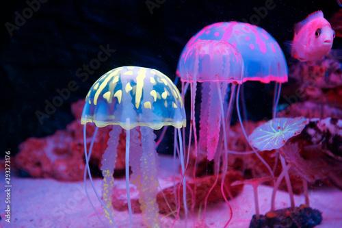 Photographie jellyfish