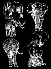 Graphical Set Of Elephants Isolated On Black Background,vector Engraved Illustration