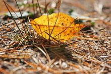 Autumn Fallen Leaf Interneur H...