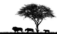 Realistic Illustration Of African Safari Landscape With Tree, Lions Family, Lioness And Lion Cub And Grass On Savanna, Vector