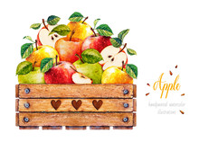 Apples. Watercolor Botanical Illustration. Wooden Box. Wooden Box With Apples