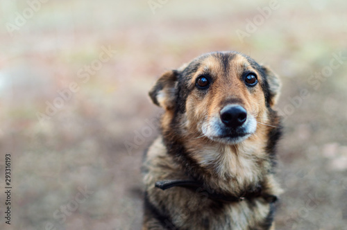 Homeless abandoned stray dog with very sad smart eyes Canvas Print
