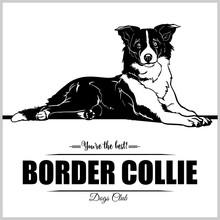 Border Collie Dog - Vector Ill...