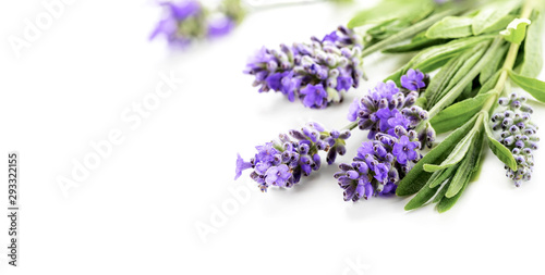Fototapeta Beautiful Lavender flowers bunch on a white. Shallow DOF obraz