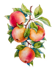 Fototapeta Do jadalni Apple. Watercolor illustration.