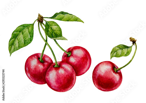 Leinwand Poster Cherry. Watercolor botanical illustration