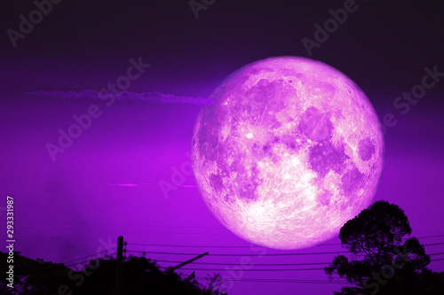 Photo super dark harvest piurple moon on night sky back dry branch tree over forest
