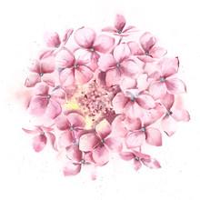 Hydrangea Flower, High Resolut...