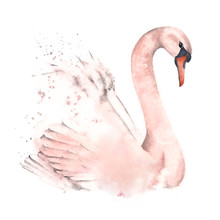 Cute Swan, Watercolor Illustration On A White Background. Design Postcards And Posters.