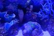 canvas print picture - Abstract underwater background, aquarium scenery, stones, corals.