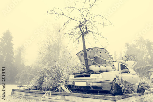 Many pumpings and plants invading old car outdoor. Canvas-taulu