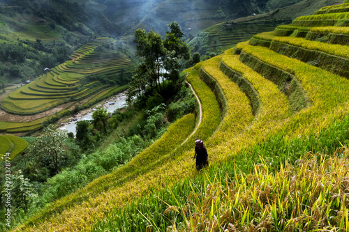 Foto auf Gartenposter Reisfelder Rice fields on terraced of Mu Cang Chai, YenBai, Vietnam. Vietnam landscapes.