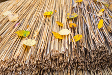 Thatched Roof With Autumn Leaves