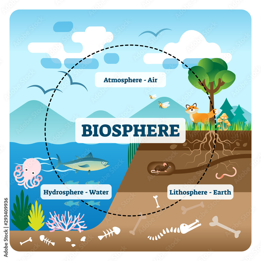 Fototapeta Biosphere vector illustration. Labeled all natural ecosystems with wildlife