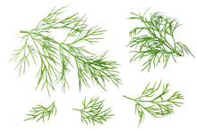 Fresh Dill Isolated On White B...
