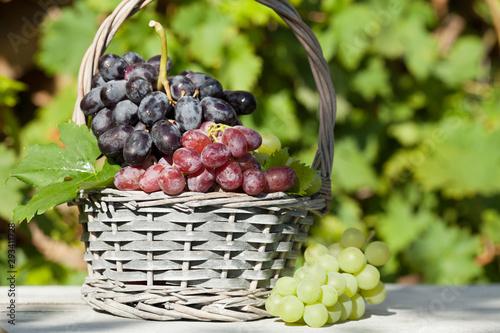 Fotografie, Obraz  Colorful grapes