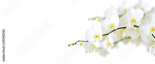 Orchidée White orchid isolated on white