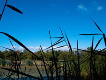 Heinz National Wildlife Preserve Overlooking Marsh - Philadelphia, PA / USA - September 29, 2019