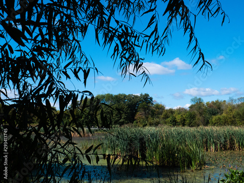 Платно Heinz National Wildlife Preserve overlooking marsh - Philadelphia, PA / USA - Se