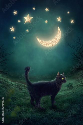 Vászonkép Black cat