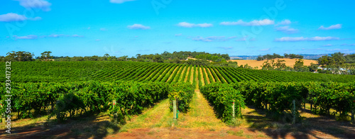 Photo Winery in Barossa Valley in South Australia.