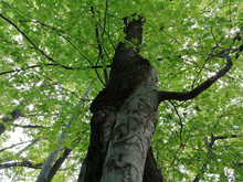 Close-up Of Two Trees In Fores...