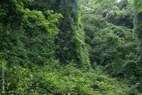 Fotografija Beautiful summer lush foliage wall